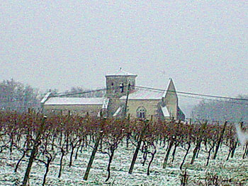 Winter Falls on Charente Vines