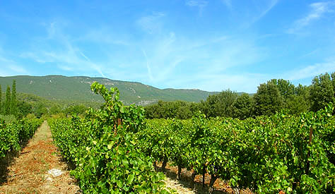 Vineyards at Le Pavillon de Galon, Curcuron, France.  Copyright 2012 - present.  Cold Spring Press.  All rights reserved.
