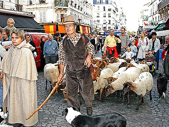 Sheep at the Montmartre vendange festivities