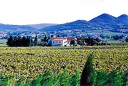 The vineyards of Vacqueyras ©1997-2006 Cold Spring Press